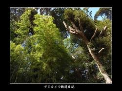 0512_kashiwa02