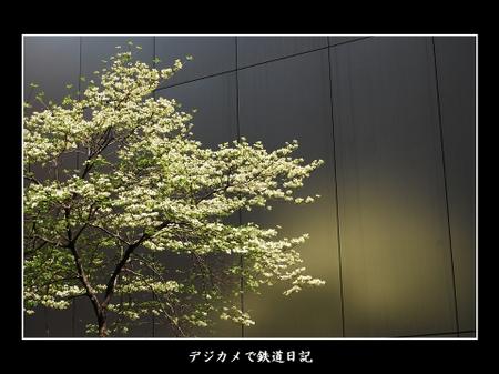 Ginza_tree_0704